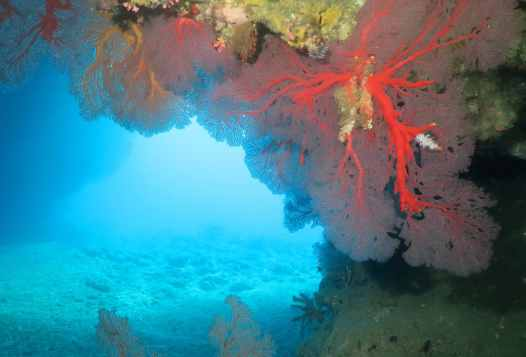 Scuba diving in Hienghene New Caledonia