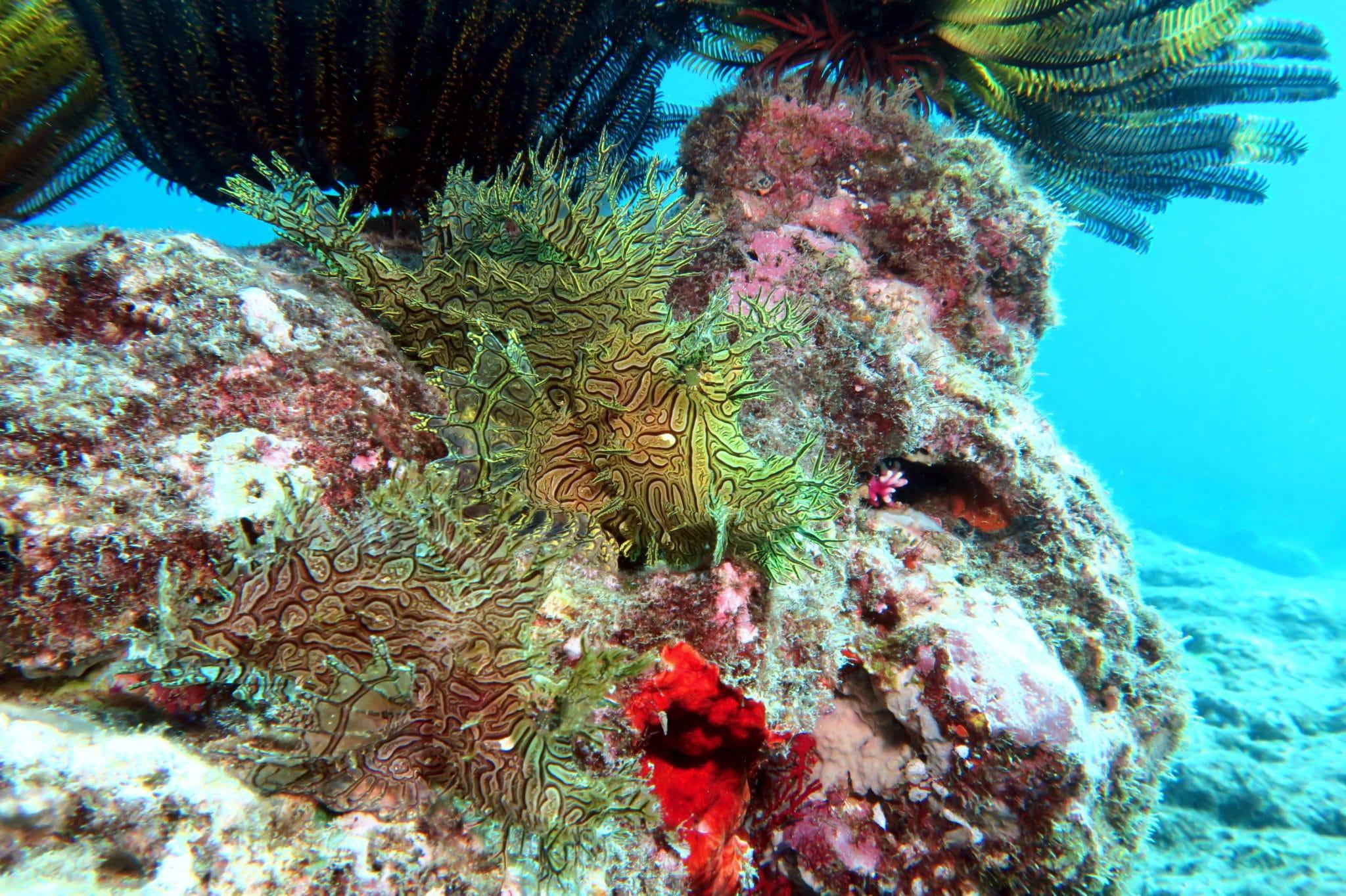 Scuba diving Poindimié New Caledonia