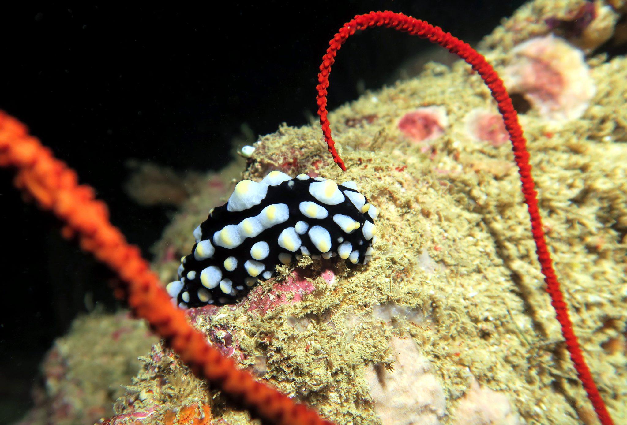 scuba diving Hienghene New Caledonia