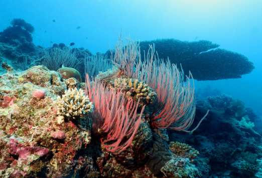 scuba diving Isle of Pines New Caledonia