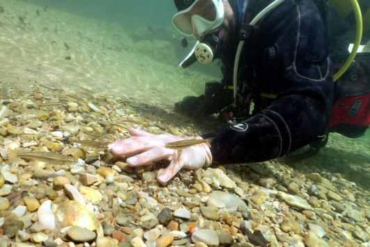 Diving Gorges du Tarn France