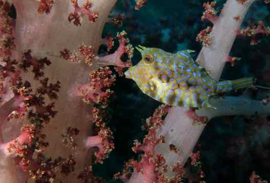 scuba diving osezaki japan