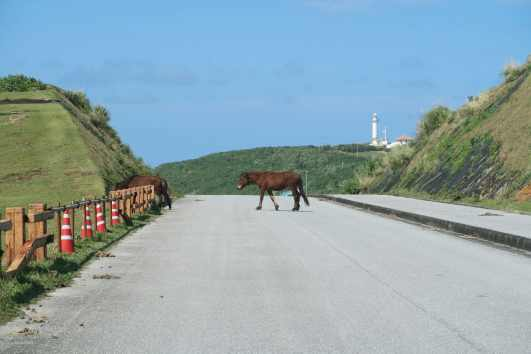 Yonaguni horse Irizaki Cape Yonaguni Okinawa Japan