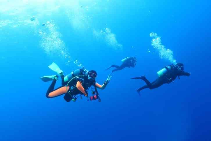 hammerhead shark dives in Yonaguni Okinawa Japan