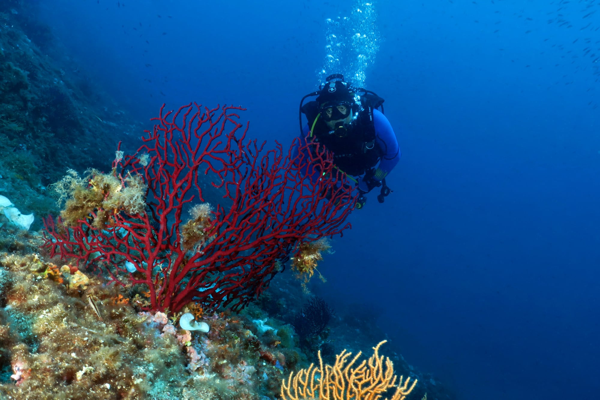 Diving in Nice French Riviera