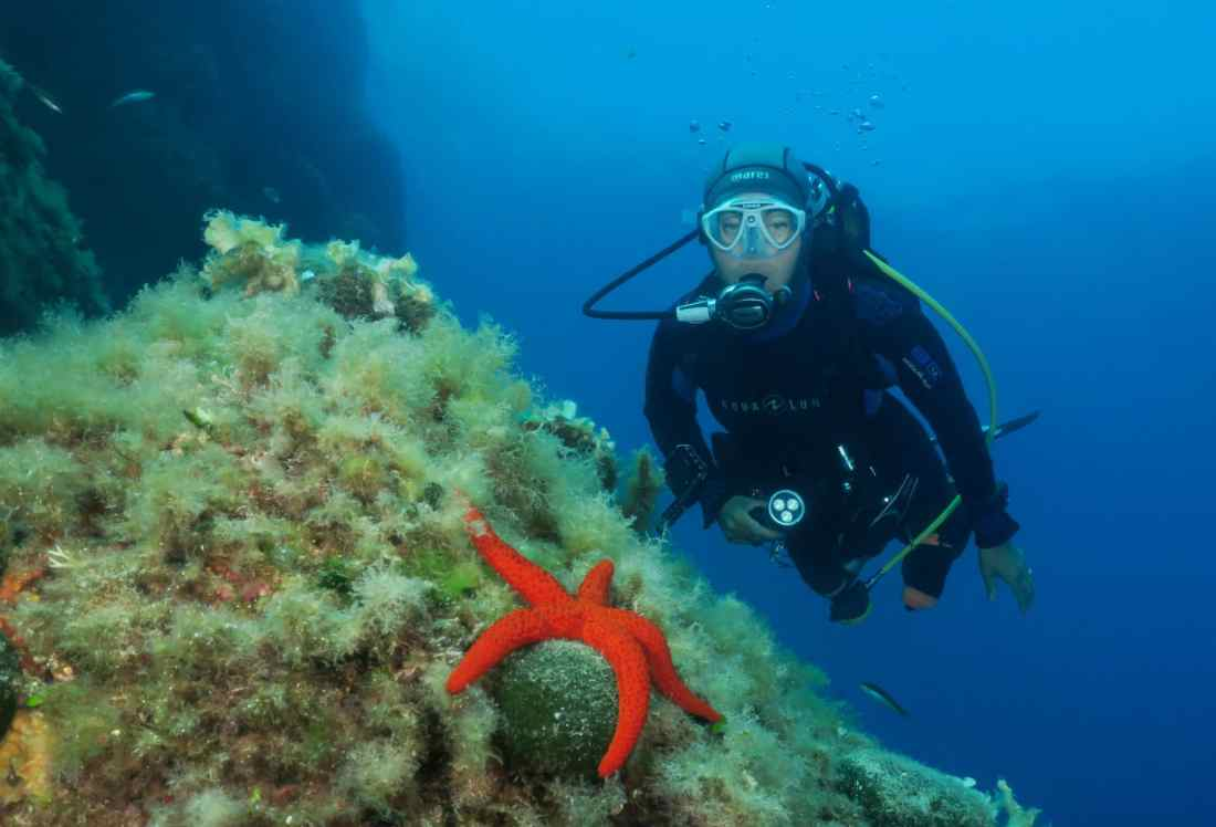 Diving La Fourmigue lighthouse Golfe-Juan Antibes