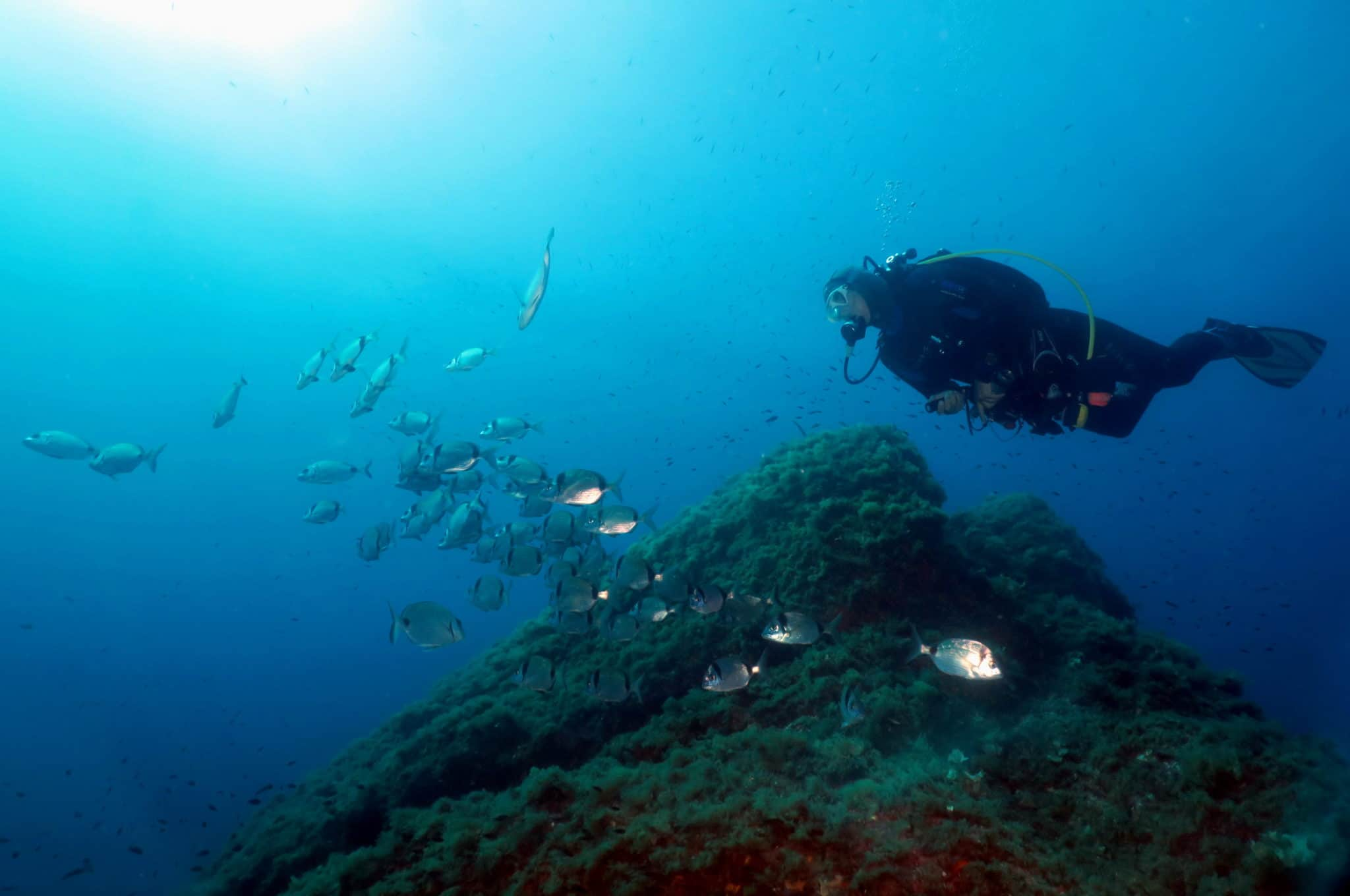 Diving La Fourmigue lighthouse Golfe-Juan Antibes