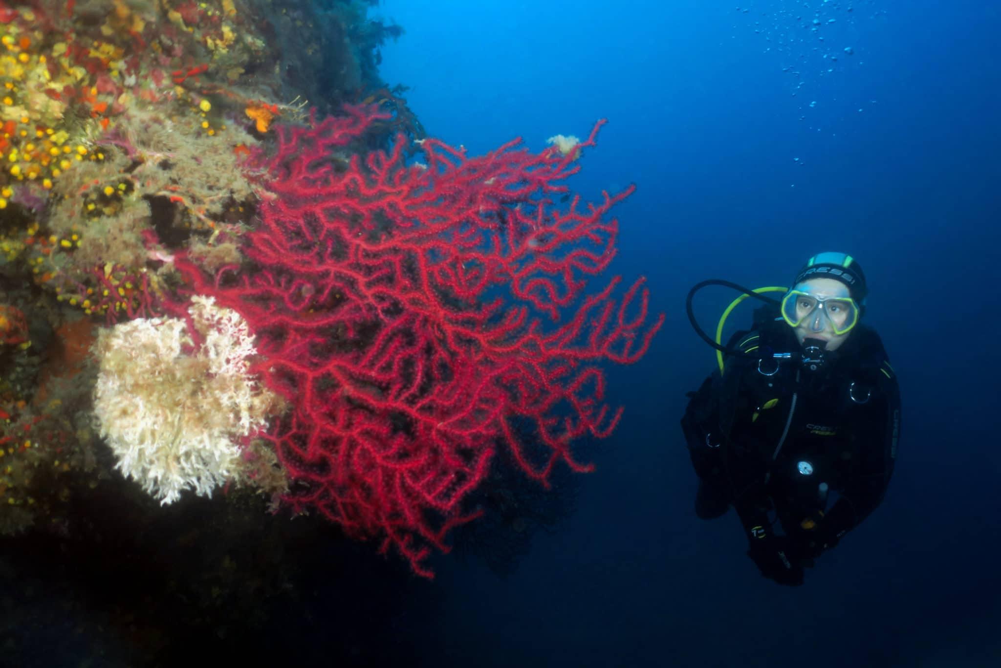 La tradeliere diving golfe juan antibes