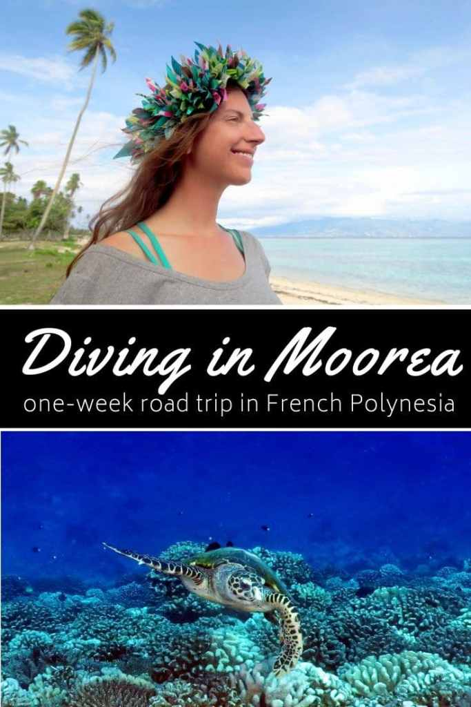 Diving in Moorea French Polynesia