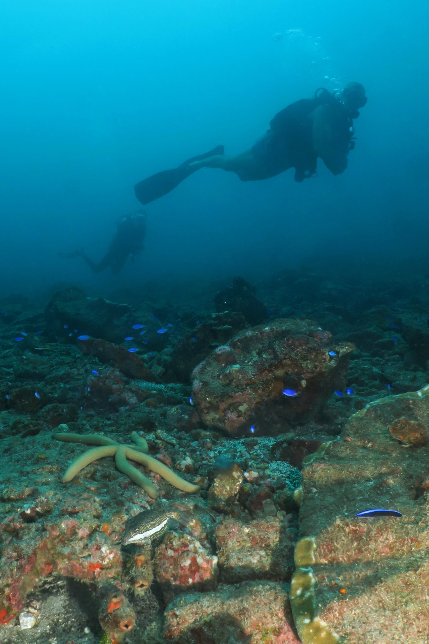scuba diving Hiva Oa - French Polynesia
