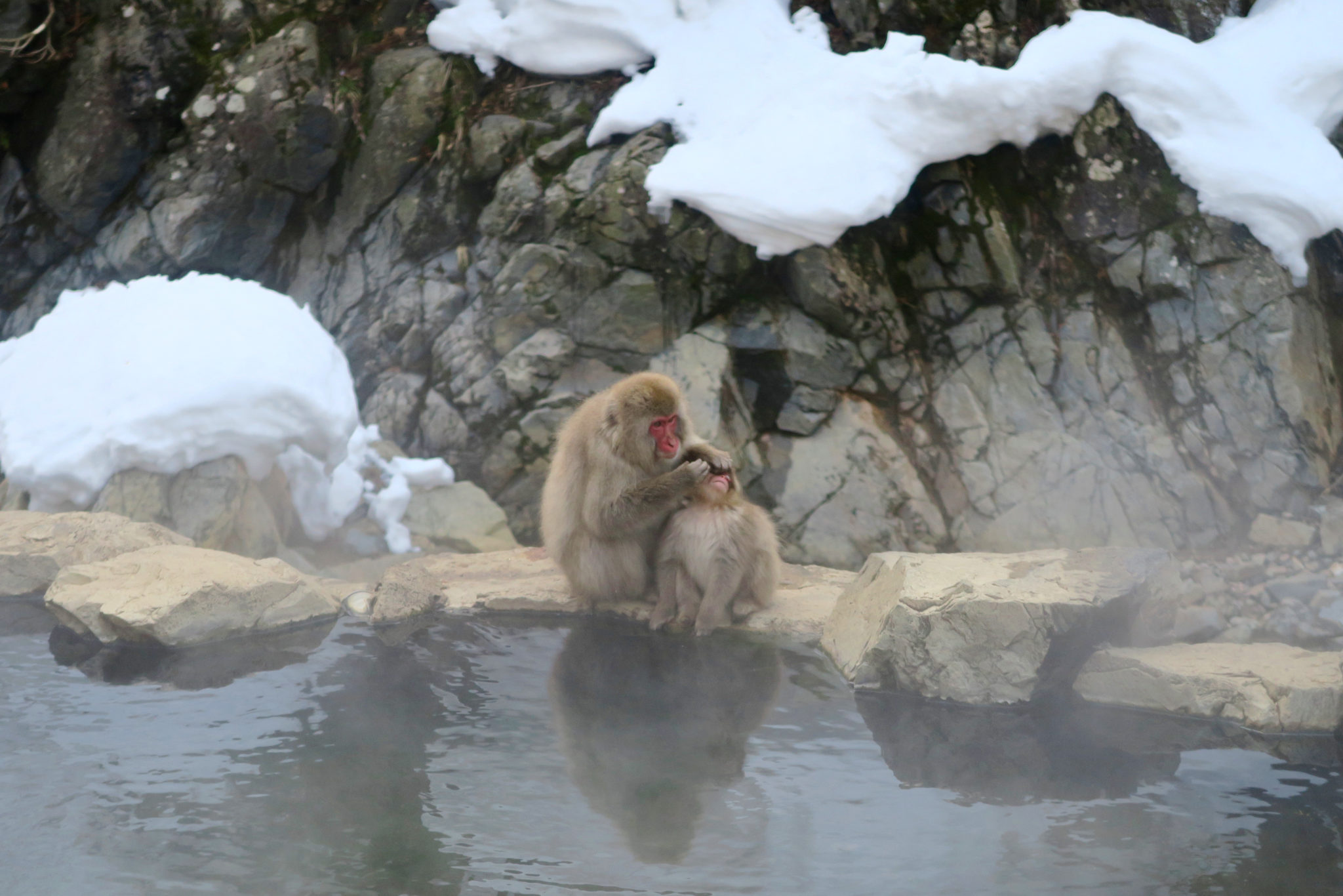 Jigokudani Snow Monkey Park Nagano Prefecture Japan