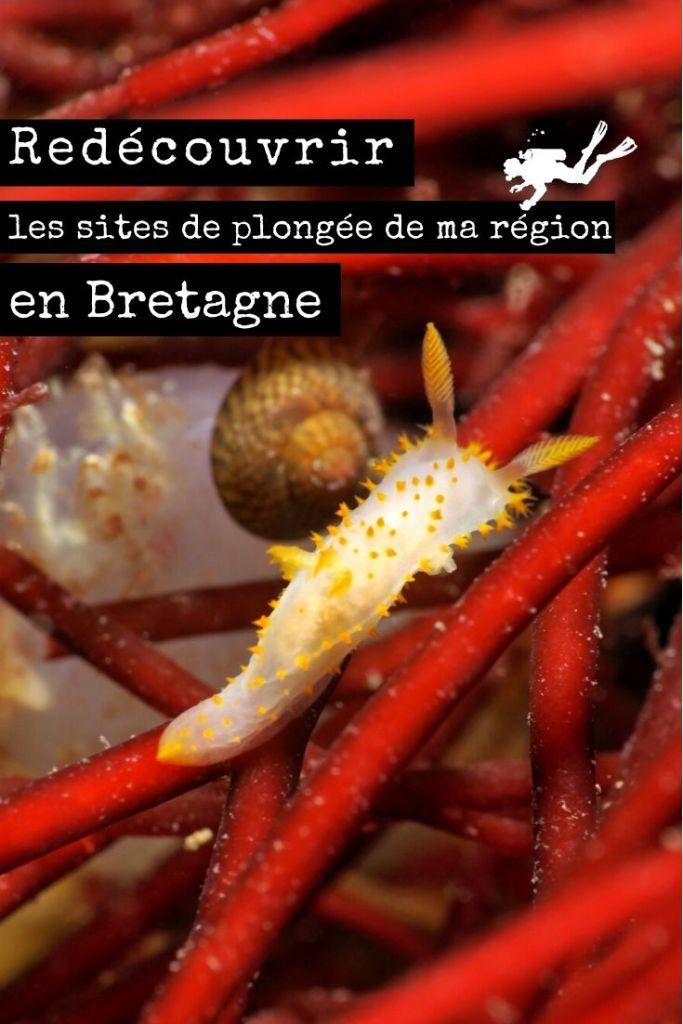 Redécouvrir les sites de plongée de ma région en Bretagne pin2