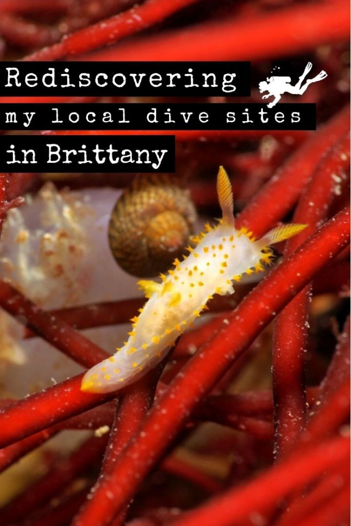 Rediscovering local dive sites in Brittany pin2