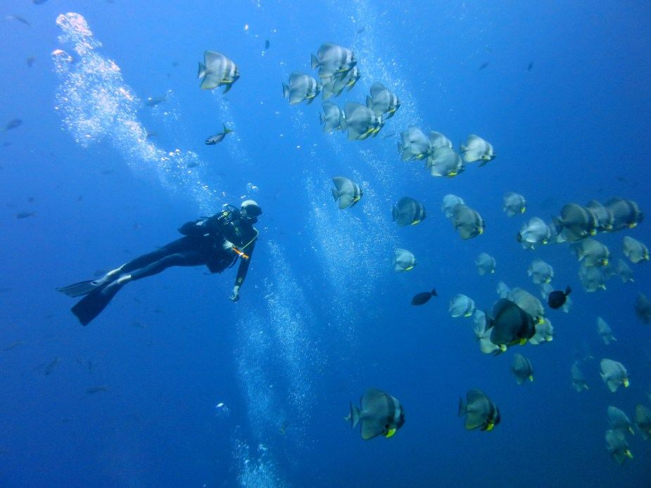 How to take pictures underwater - marine life encounter