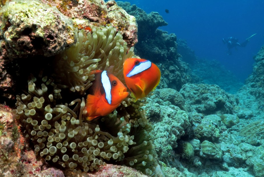 How to take pictures underwater - close-up composition