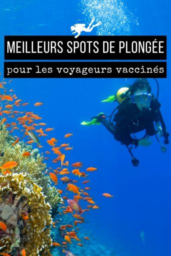 meilleurs spots de plongée pour les voyageurs vaccinés
