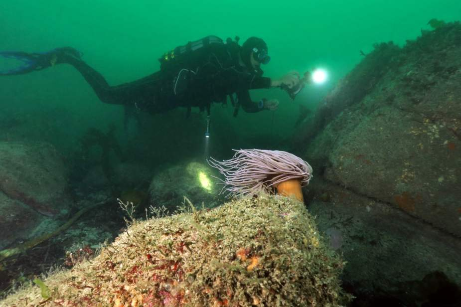 scuba diving Saint-Pabu