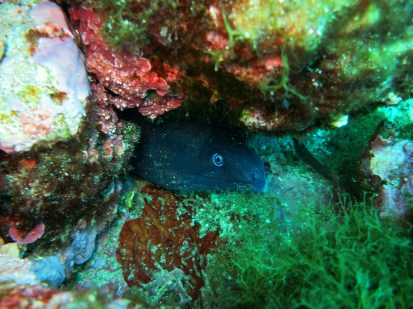 moray eel Marseille