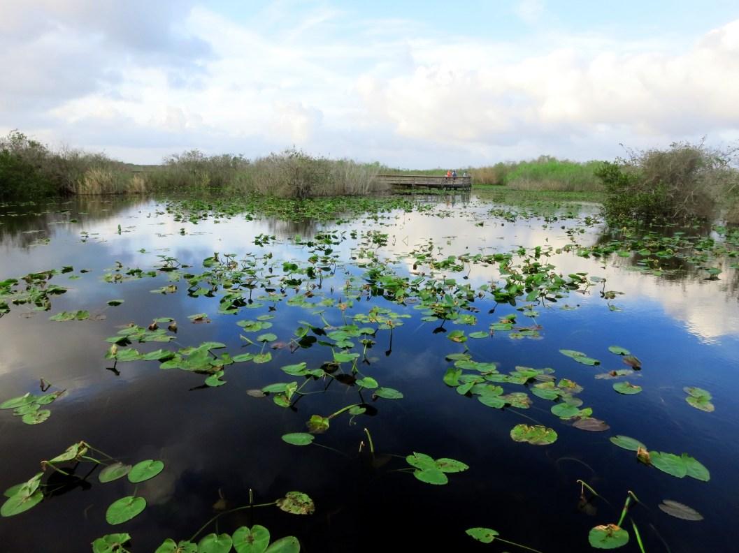Anhinga trail Royal Palm Everglades Florida