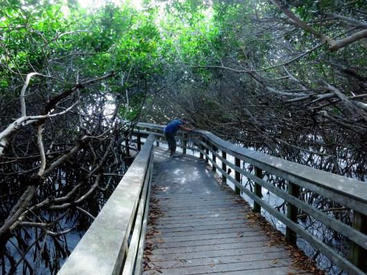 West Lake Everglades Florida