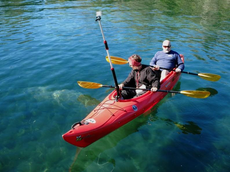 Manatee Kayak Crystal River Florida USA