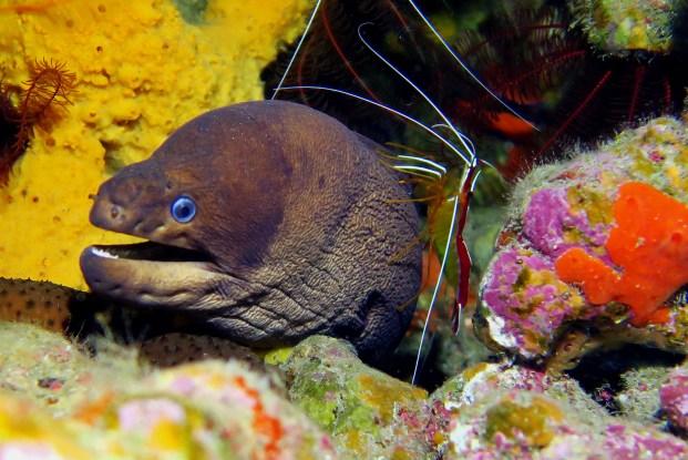 Dark morray eel scuba diving Tenerife Canary Islands