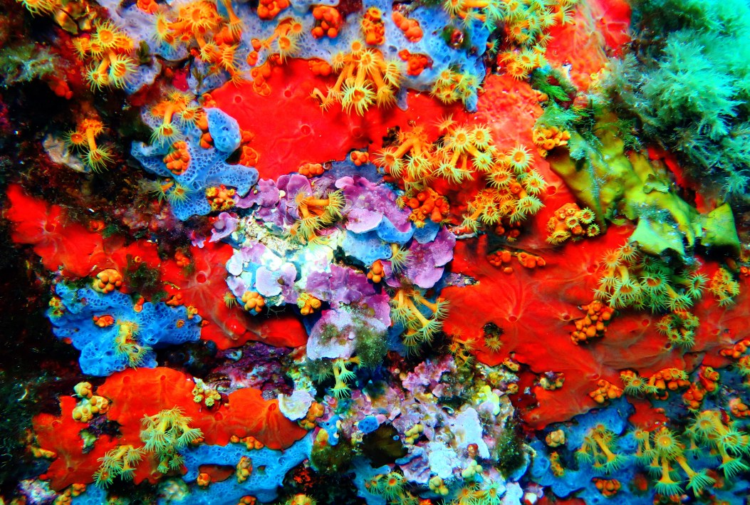 sponge and anemones scuba diving porquerolles France