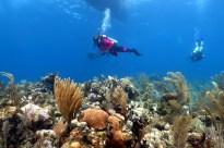 scuba diving in Utila Honduras