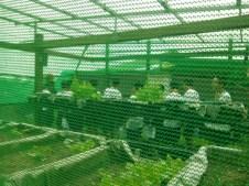 Modular vegetable gardening