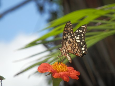 My other name for Cambodia is Land of the Butterflies.