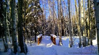 Wedgewood Wildlife Sanctuary provides a quiet walk through a winter wonderland.
