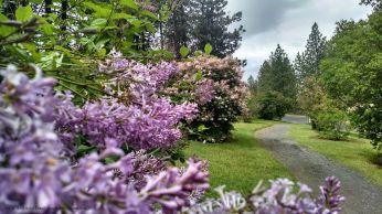 spokane lilac garden