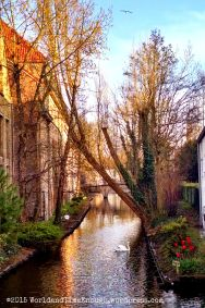 Magical-looking canal... there's even a swan!