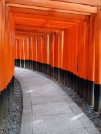 The famous torii path.