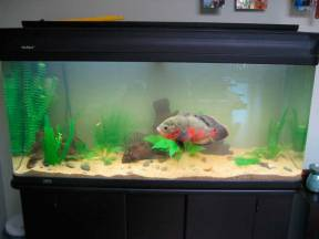 нужен ли фильтр в аквариуме