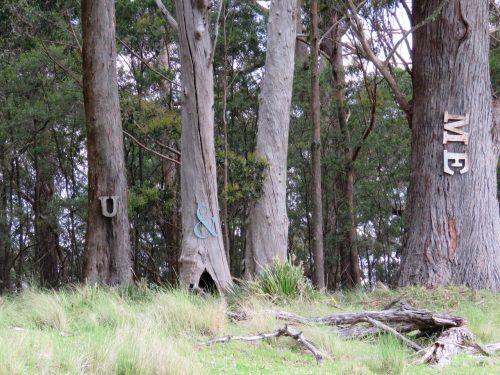 Spicers Peak Lodge trees