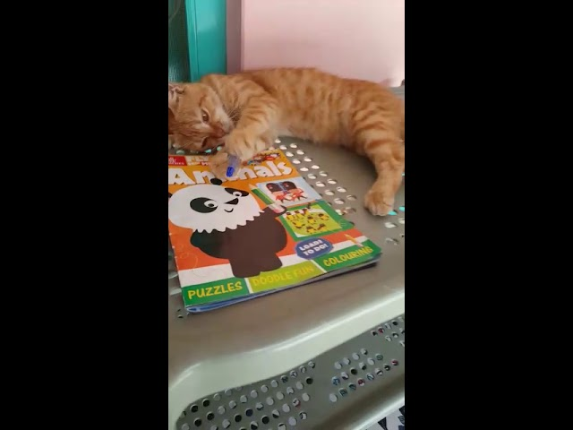 Image of: Youtube Funny Cat Videos World Cat Comedy Funny Cats And Cute Kittens Playing Compilation For Laugh cats And