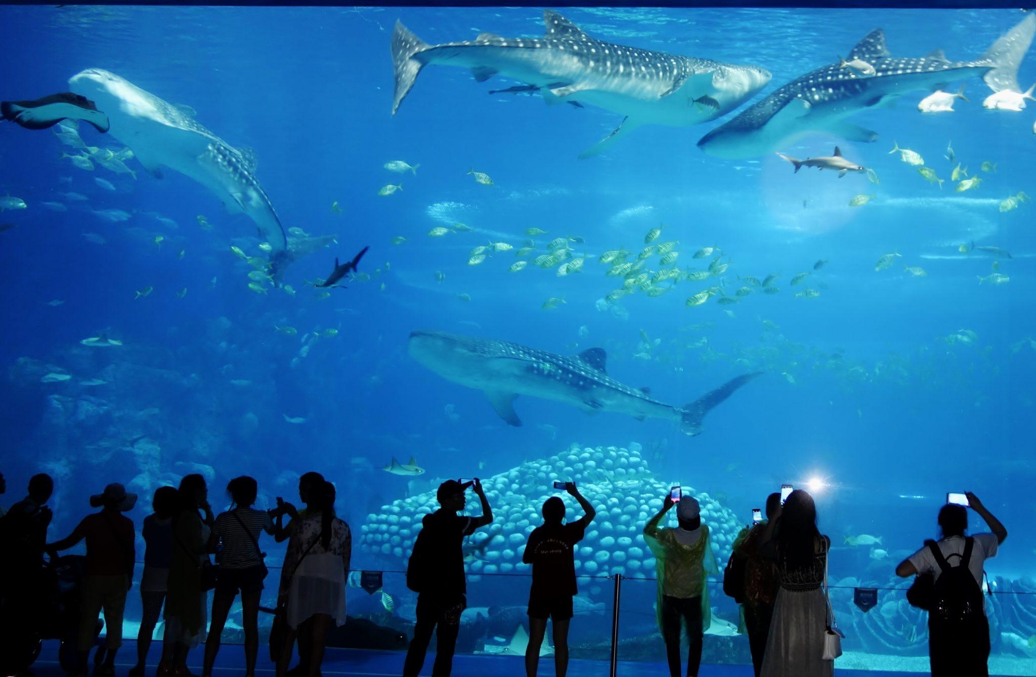 largest and best aquariums