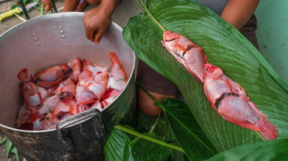 Freshly caught Tilapia being prepared in the traditional way of the community; wrapped in fresh banana leaves.