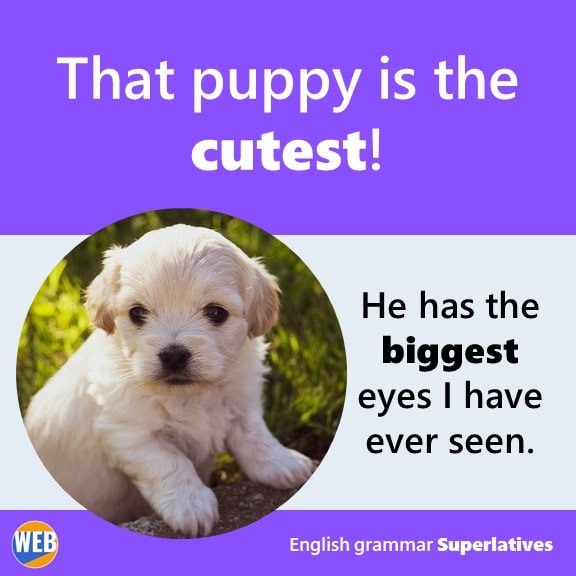 English grammar Superlatives Let's get that puppy! He's the cutest
