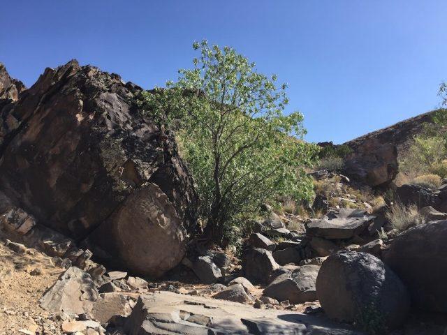 Mystery Stone alongside a lonely tree.