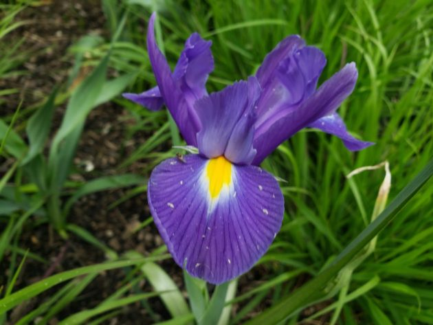 Purple flower wisdom