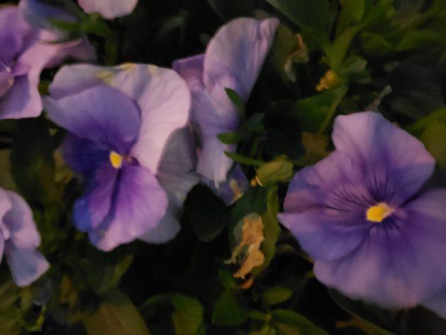 Delicate wisdom impatient flower
