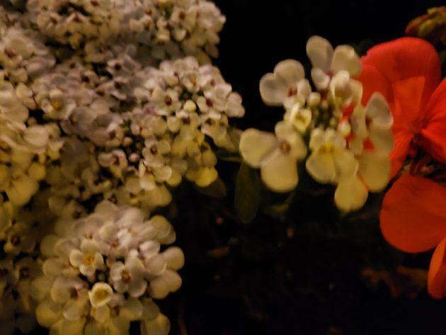 Night life Philadelphia flowers