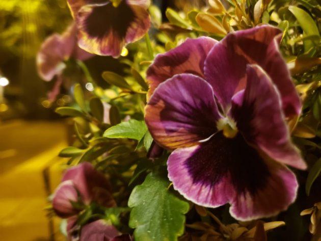 Laye night flower box