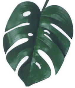 Monstera Fern (Logo)