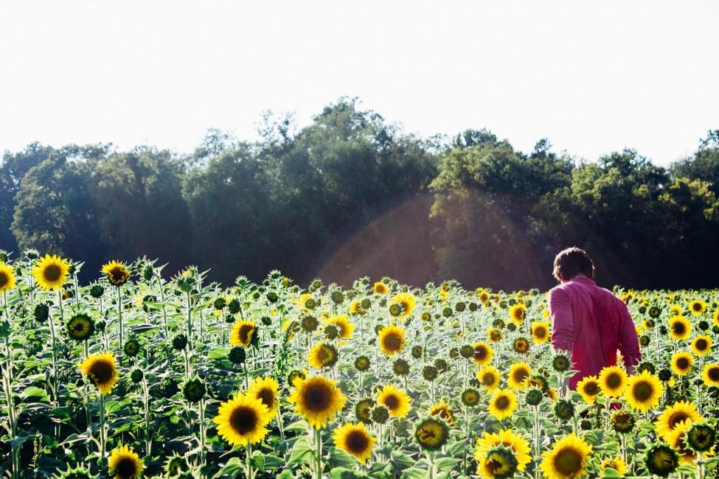 sunflowers-.jpg