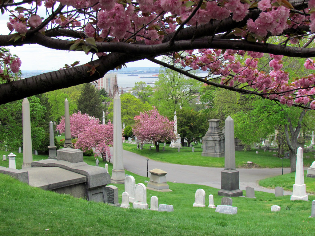 Cherry Blossoms in bloom at Green-Wood Cemetery. Photo: David Berkowitz (CreativeCommons)