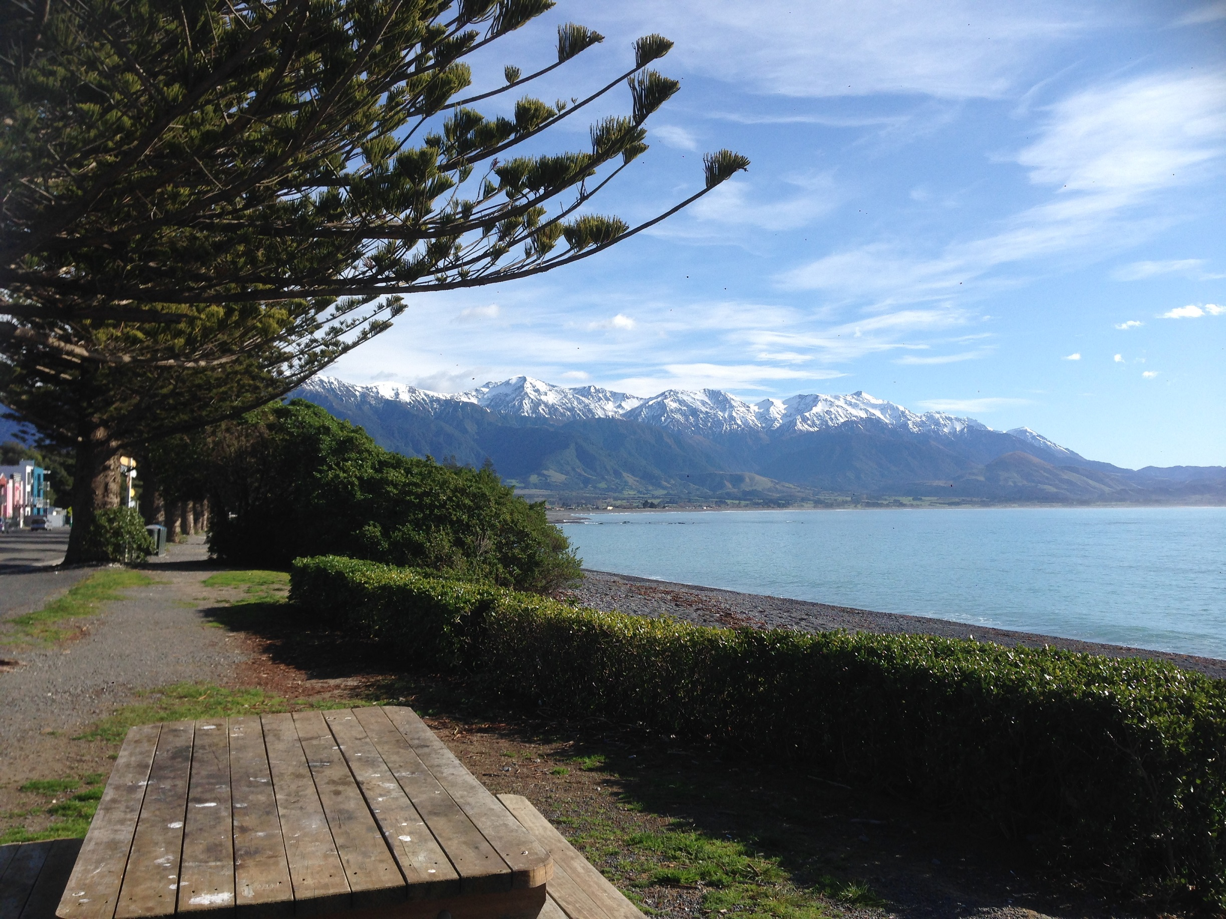Kaikoura Peninsula, NZ. Photo by Ann-Marie Cahill