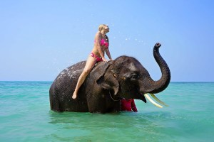An example of animal tourism. Riding an elephant in Thailand.